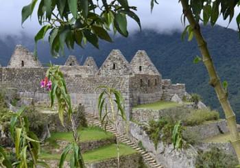 Blommor vid Machu Picchu