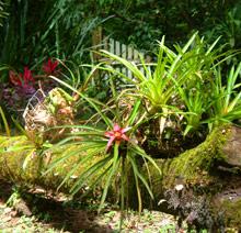 Blommande djungel