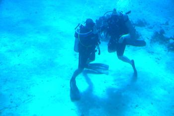 Dyka i Röda Havet