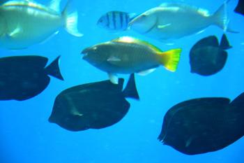 Fiskar i Röda Havet